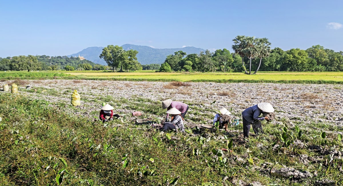 農作業 体験 農業体験農園