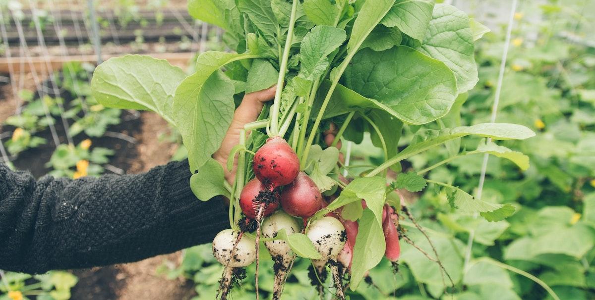 田舎で一人農業
