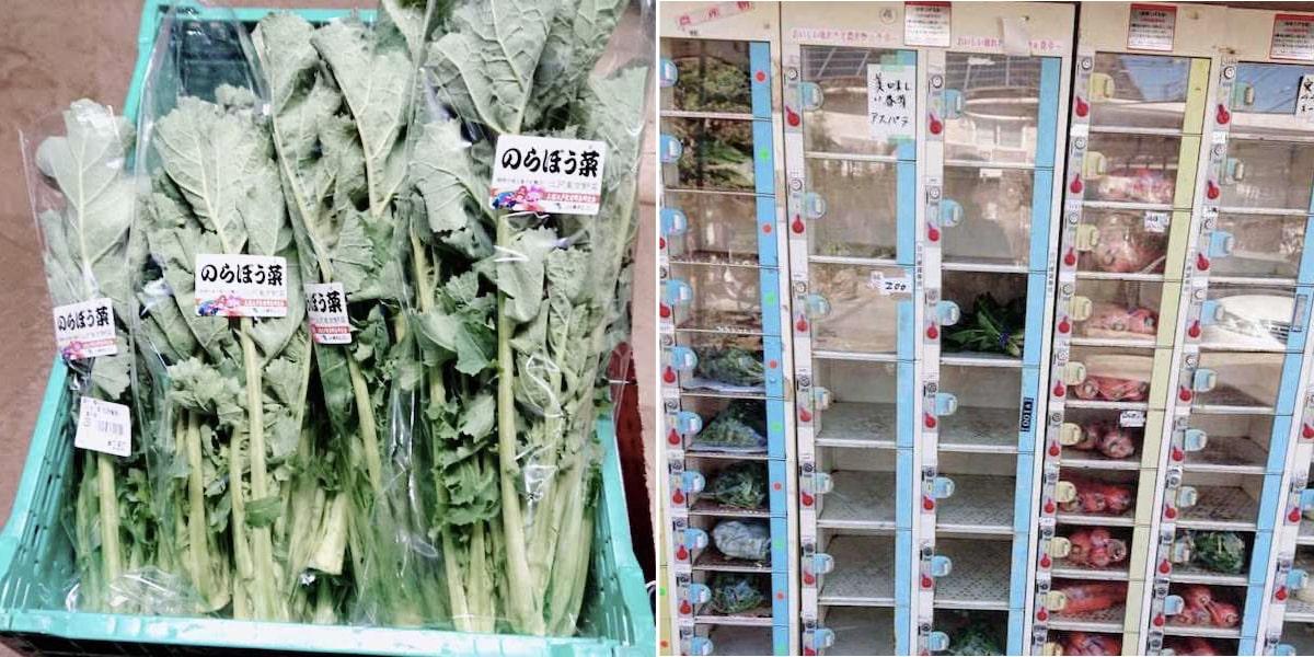 のらぼう菜と販売所