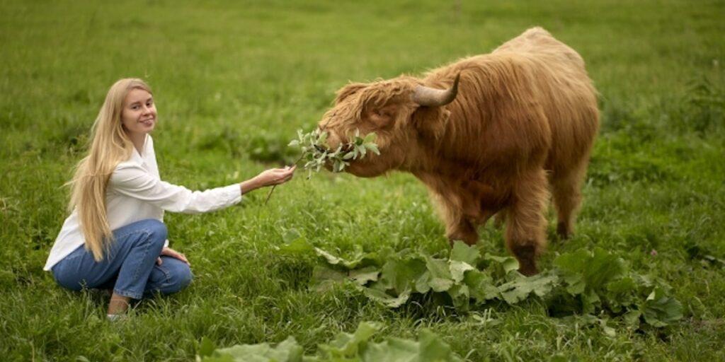 酪農家と出会う4つの方法