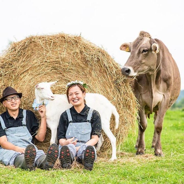 酪農家夫婦 牛