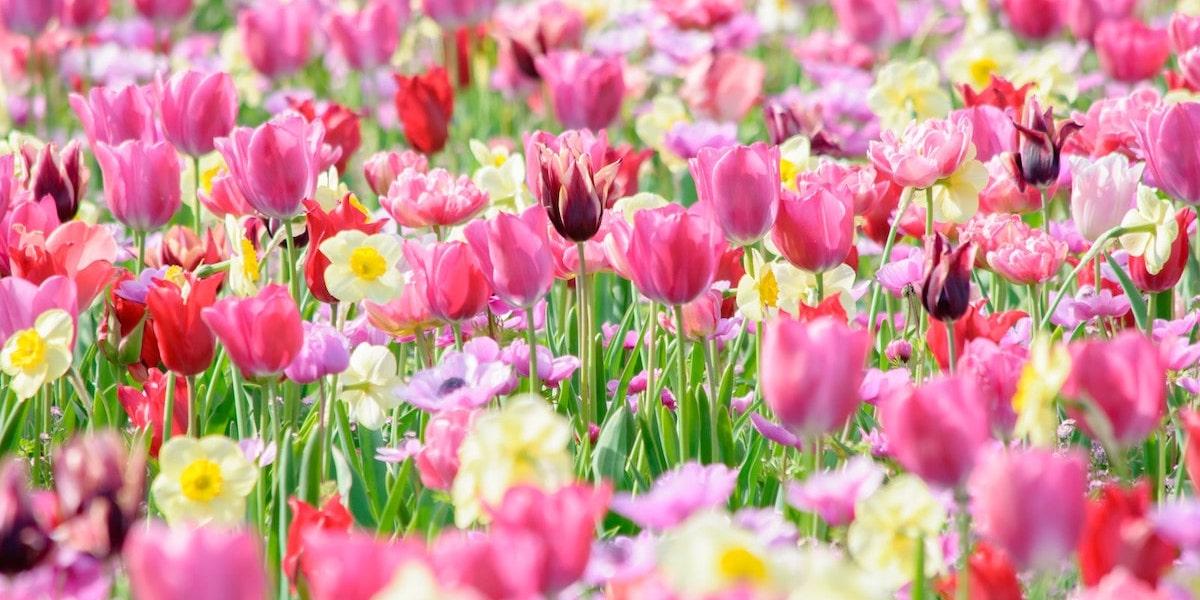 田舎の花畑デート