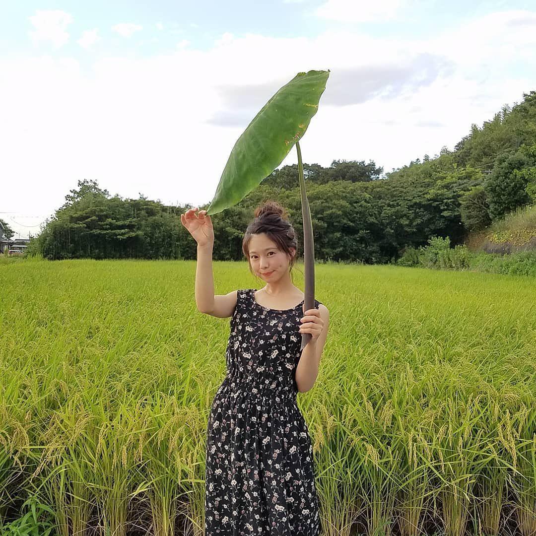 農業女子 里芋