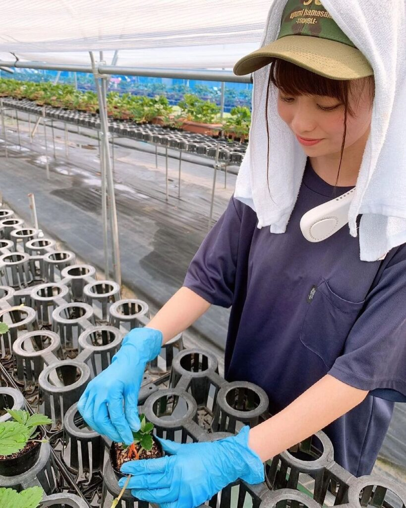 美人 農業女子 いちご