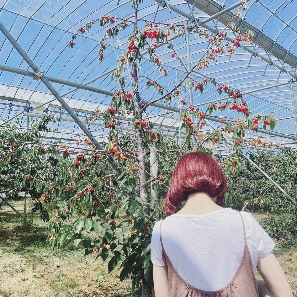 ニトリ観光果樹園 フルーツ狩り 北海道