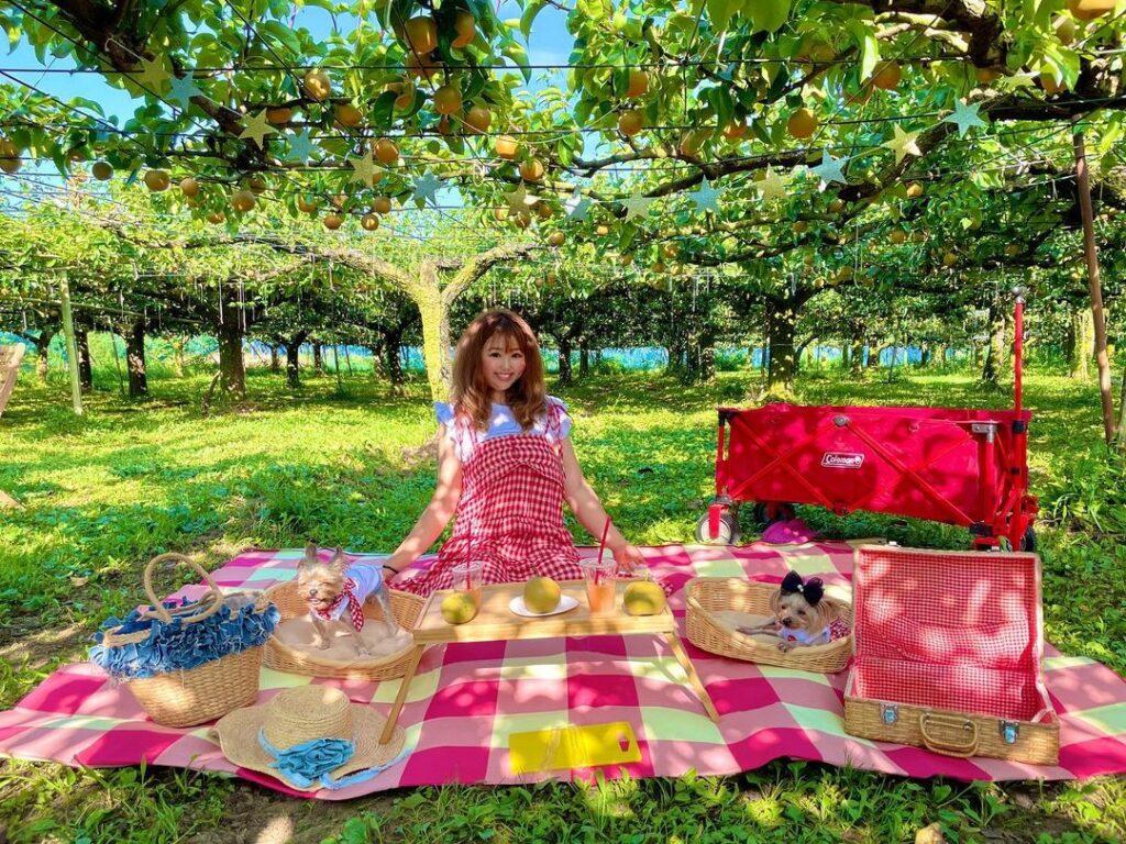 果物狩り 関東 矢口果樹園